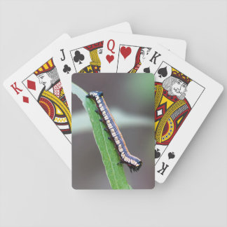Brown-Hooded Owlet Caterpillar Playing Cards