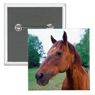 Brown horse, close-up 15 cm square badge
