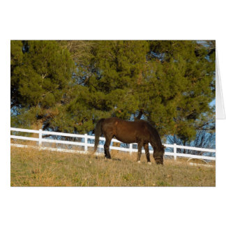 Brown Horse Grazing Greeting Card
