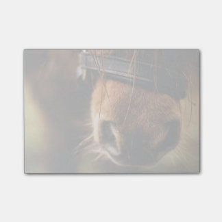 Brown Horse Nose Photo Cute and Rustic Post-it Notes