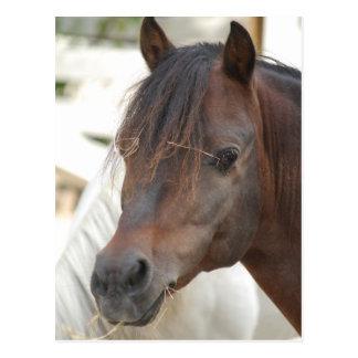 brown horse postcard