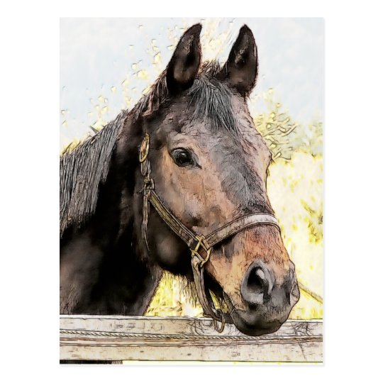 Brown Horse Postcard