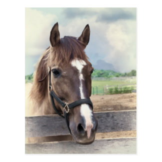 Brown Horse with Bridle Postcard