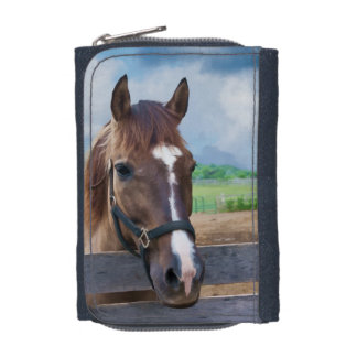 Brown Horse with Halter Wallets