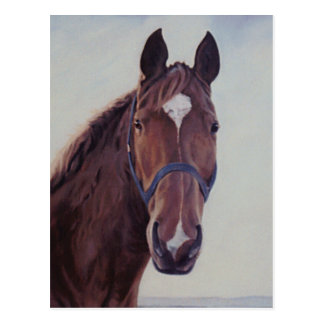 Brown Horse with White Patch Postcard