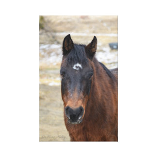 Brown Horse Wrapped Canvas