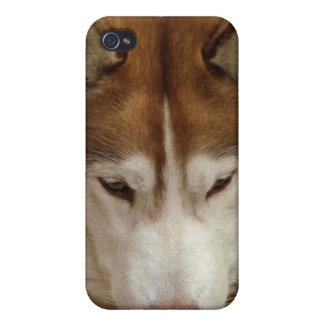 Brown Husky iPhone 4 Case