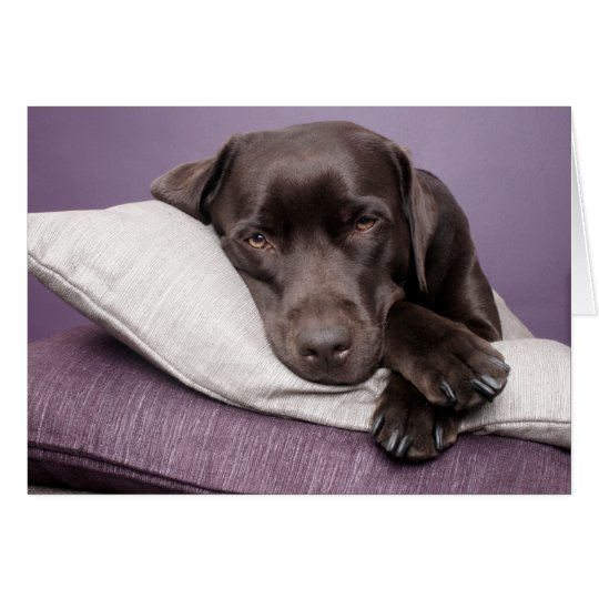 Brown Labrador Retriever Puppy Dog Blank Note Card