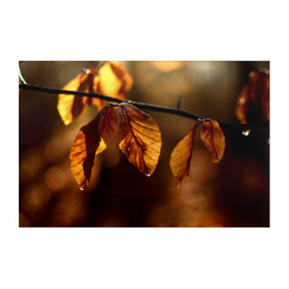 Brown leaves lighted by the morning sun acrylic print