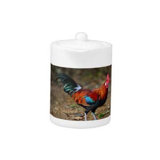Brown Leghorn Rooster