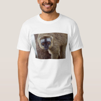 Brown lemur (Eulemur fulvus) in the forest Shirt