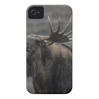 Brown Moose iPhone 4 Covers