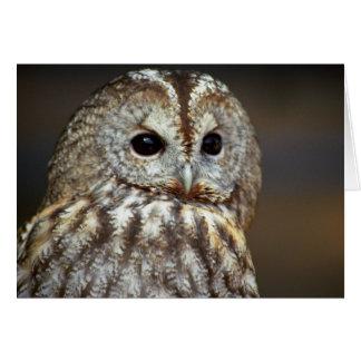Brown Owl Greeting Card