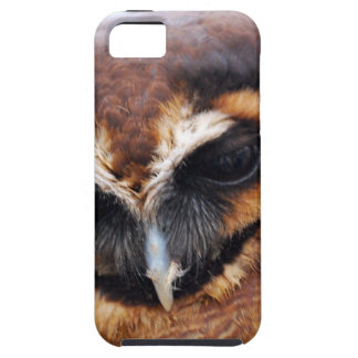 Brown Owl iPhone 5 Cases