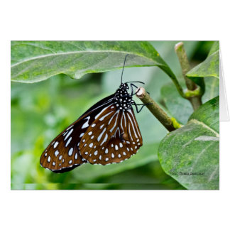 Brown Painted Butterfly Greeting Card