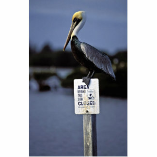 Brown pelican perches on refuge sign photo sculptures