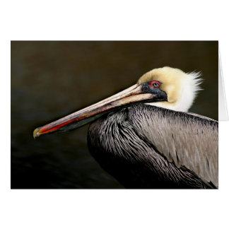 Brown Pelican Portrait Card