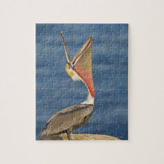 Brown Pelican with mouth open Jigsaw Puzzle