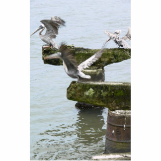Brown Pelicans Looking For Fish In Water Photo Sculptures