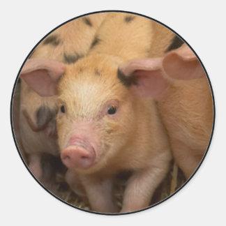 """""""Brown piglet"""" Round Sticker"""