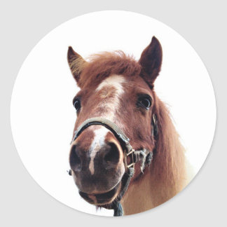 Brown Pony Classic Round Sticker