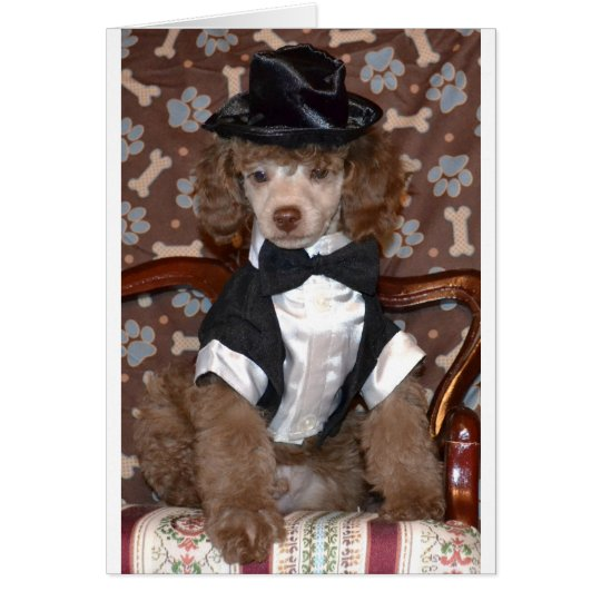 Brown Poodle Puppy in Suit Card