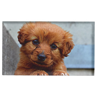 Brown Puppy Portrait Photo Table Card Holder