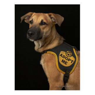 Brown rescue dog with adopt me vest postcard