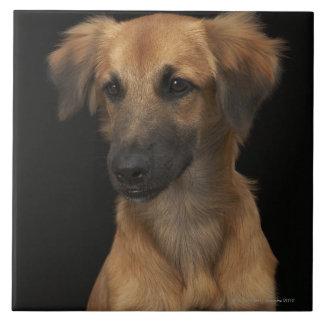 Brown resuce dog with black nose on black large square tile