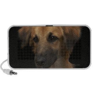 Brown resuce dog with black nose on black speaker system