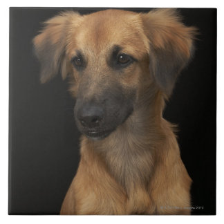 Brown resuce dog with black nose on black tile