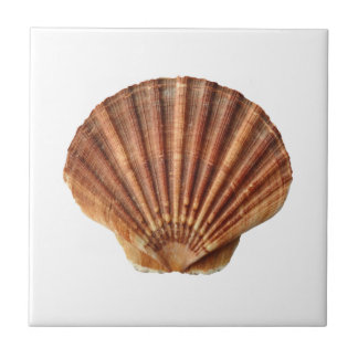 Brown scallops shell on white tile