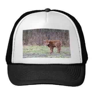 Brown scottish highlander calf in meadow cap