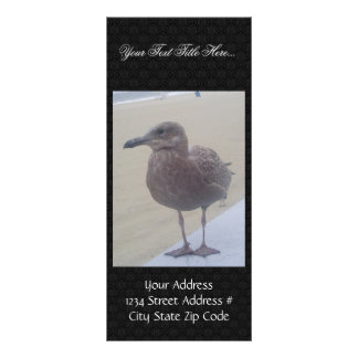 Brown Seagull Waiting For A Fish On The Beach Full Color Rack Card