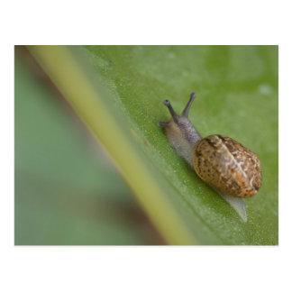 Brown snail on dew covered leaf postcard