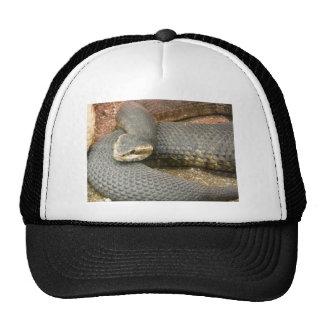 brown snake hats