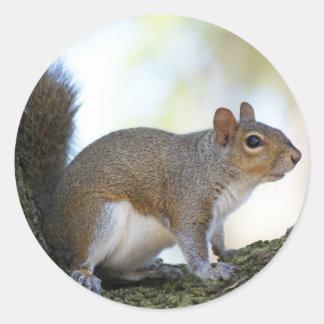 Brown Squirrel Classic Round Sticker
