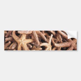 Brown Starfish Bumper Sticker