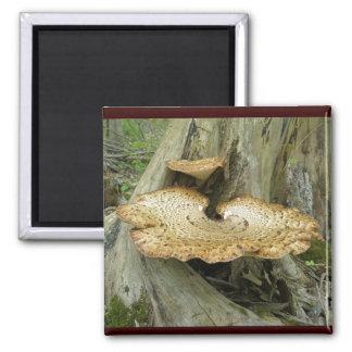 Brown Striped Shelf Fungus Coordinating Items Fridge Magnet