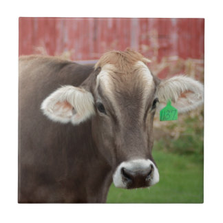Brown Swiss Cow Small Square Tile