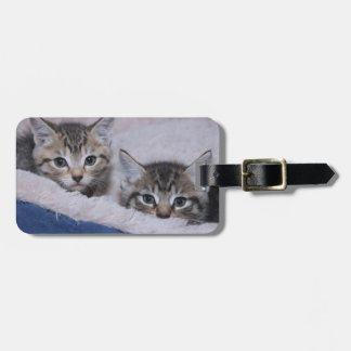 BROWN TABBY KITTENS LUGGAGE TAG