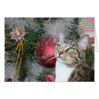 Brown tabby with white Christmas Card