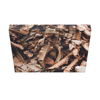 Brown Themed, A Bed Of Crisp, Brown Leaves Have Fa Canvas Print