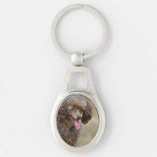 Brown Toy Poodle Silver-Colored Oval Key Ring