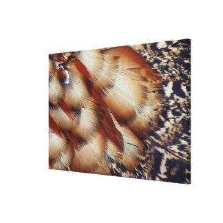 Brown Tragopan Feather Abstract Canvas Print