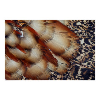Brown Tragopan Feather Abstract Poster