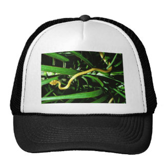 Brown tree snake mesh hats