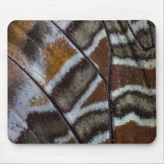 Brown tropical butterfly close-up mouse pad