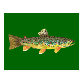 Brown Trout Fishing Postcard