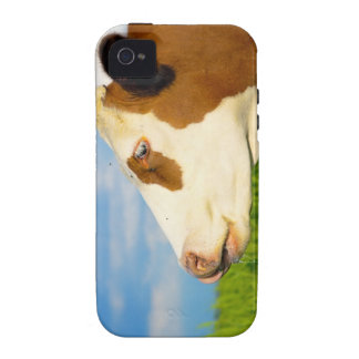 Brown white cow looking straight ahead. vibe iPhone 4 cover